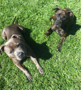 zeus and shadow